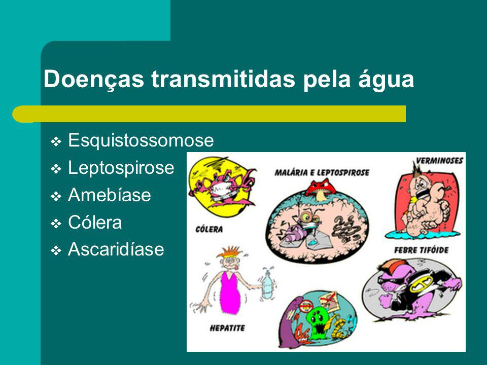 Doenças transmitidas pela água Esquistossomose Leptospirose Amebíase Cólera Ascaridíase