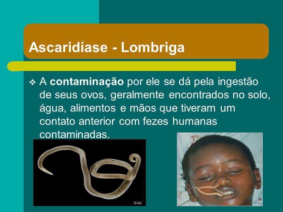 Ascaridíase - Lombriga A contaminação por ele se dá pela ingestão de seus ovos, geralmente encontrados no solo, água, alimentos e mãos que tiveram um