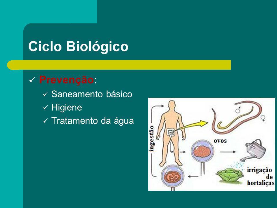 Ciclo Biológico Prevenção: Saneamento básico Higiene Tratamento da água