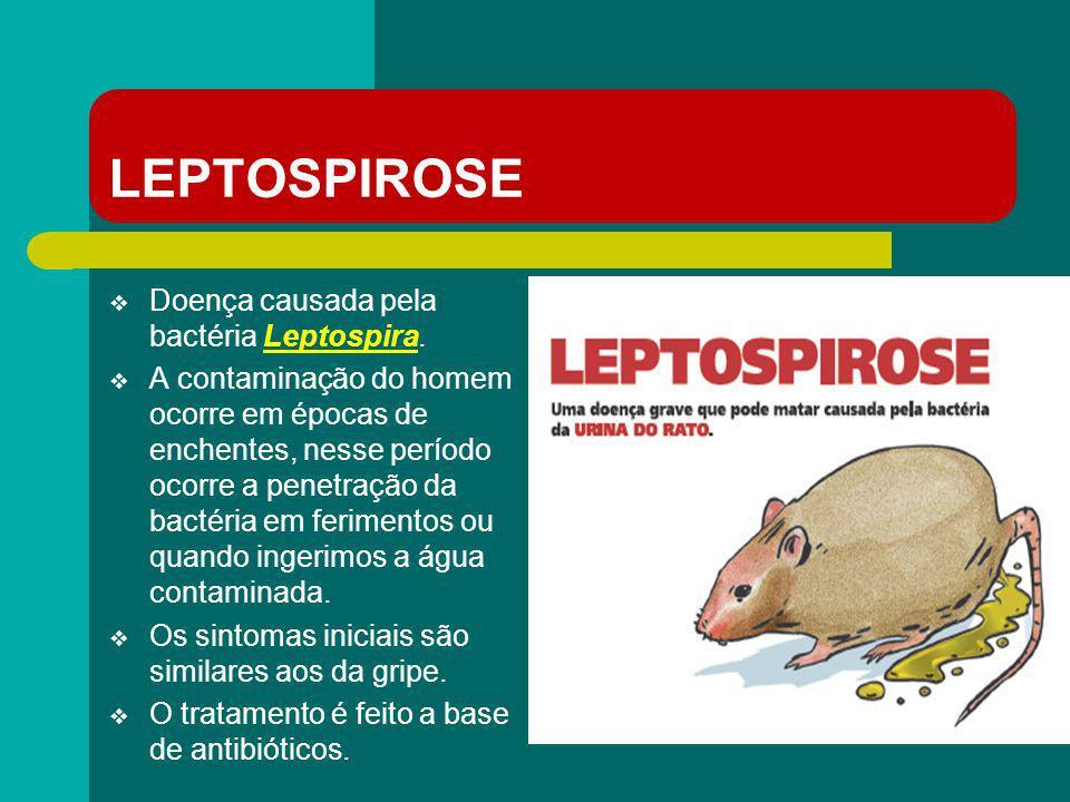 LEPTOSPIROSE Doença causada pela bactéria Leptospira. A contaminação do homem ocorre em épocas de enchentes, nesse período ocorre a penetração da bact