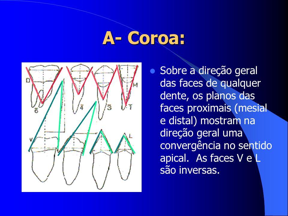 Sobre a direção geral das faces de qualquer dente, os planos das faces proximais (mesial e distal) mostram na direção geral uma convergência no sentid