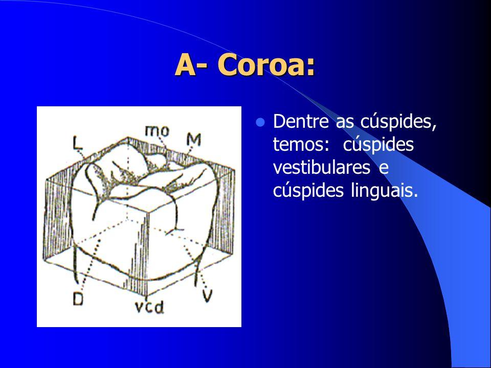 Dentre as cúspides, temos: cúspides vestibulares e cúspides linguais.