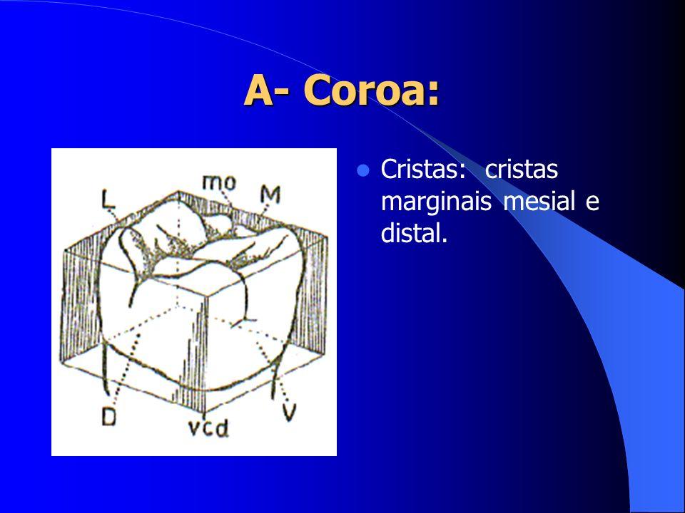 Cristas: cristas marginais mesial e distal.