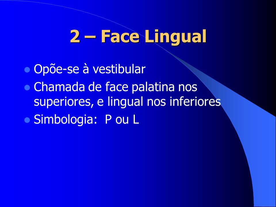 2 – Face Lingual Opõe-se à vestibular Chamada de face palatina nos superiores, e lingual nos inferiores Simbologia: P ou L