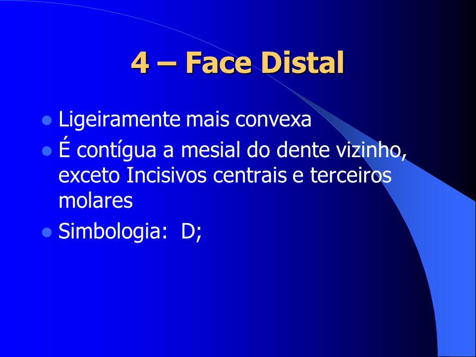 4 – Face Distal Ligeiramente mais convexa É contígua a mesial do dente vizinho, exceto Incisivos centrais e terceiros molares Simbologia: D;