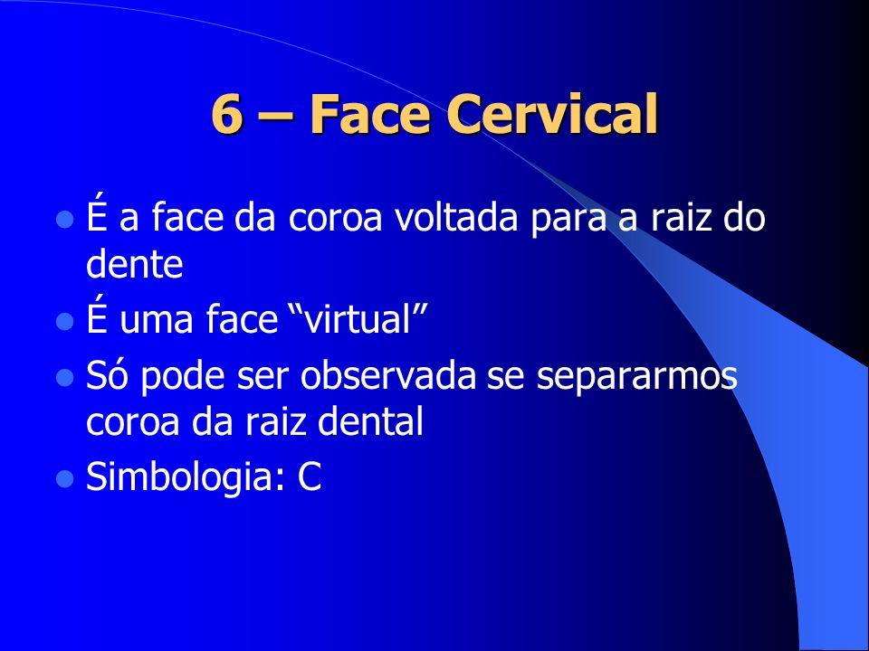 6 – Face Cervical É a face da coroa voltada para a raiz do dente É uma face virtual Só pode ser observada se separarmos coroa da raiz dental Simbologi