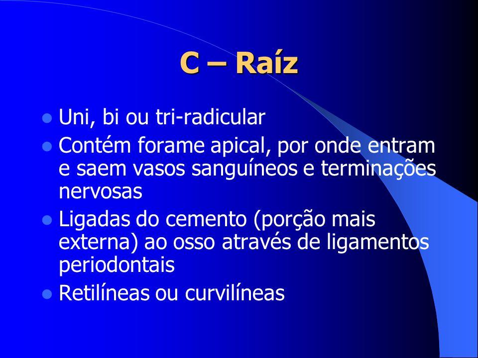 C – Raíz Uni, bi ou tri-radicular Contém forame apical, por onde entram e saem vasos sanguíneos e terminações nervosas Ligadas do cemento (porção mais