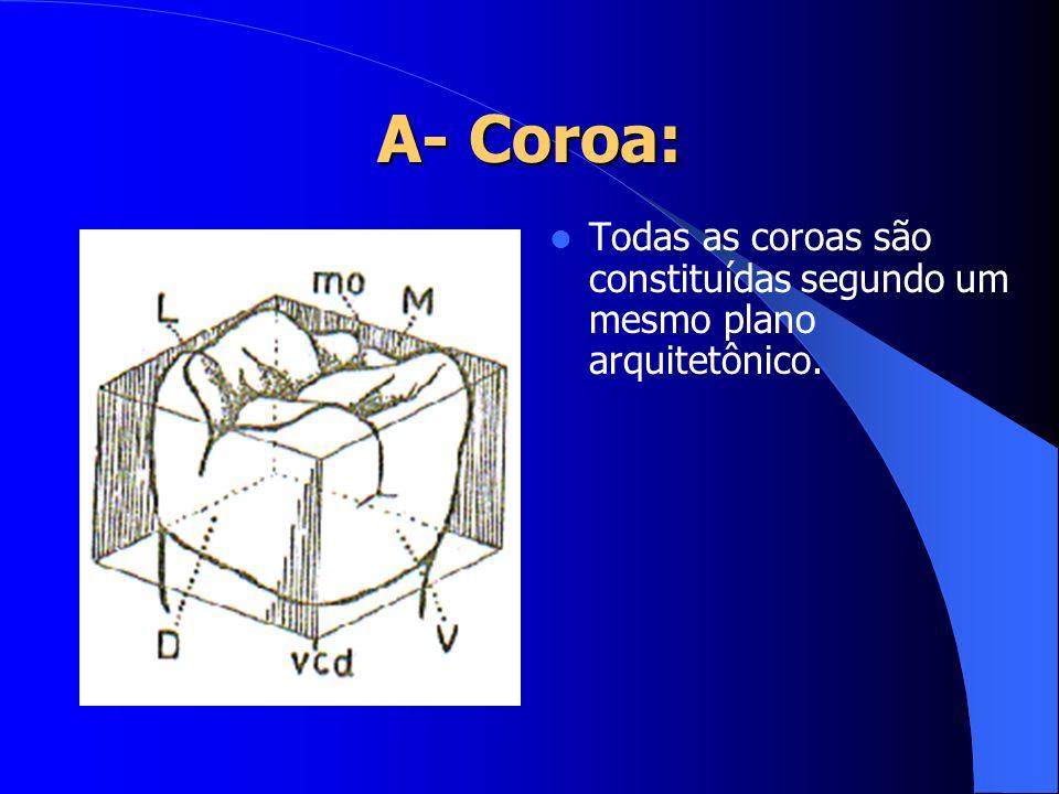 Todas as coroas são constituídas segundo um mesmo plano arquitetônico.