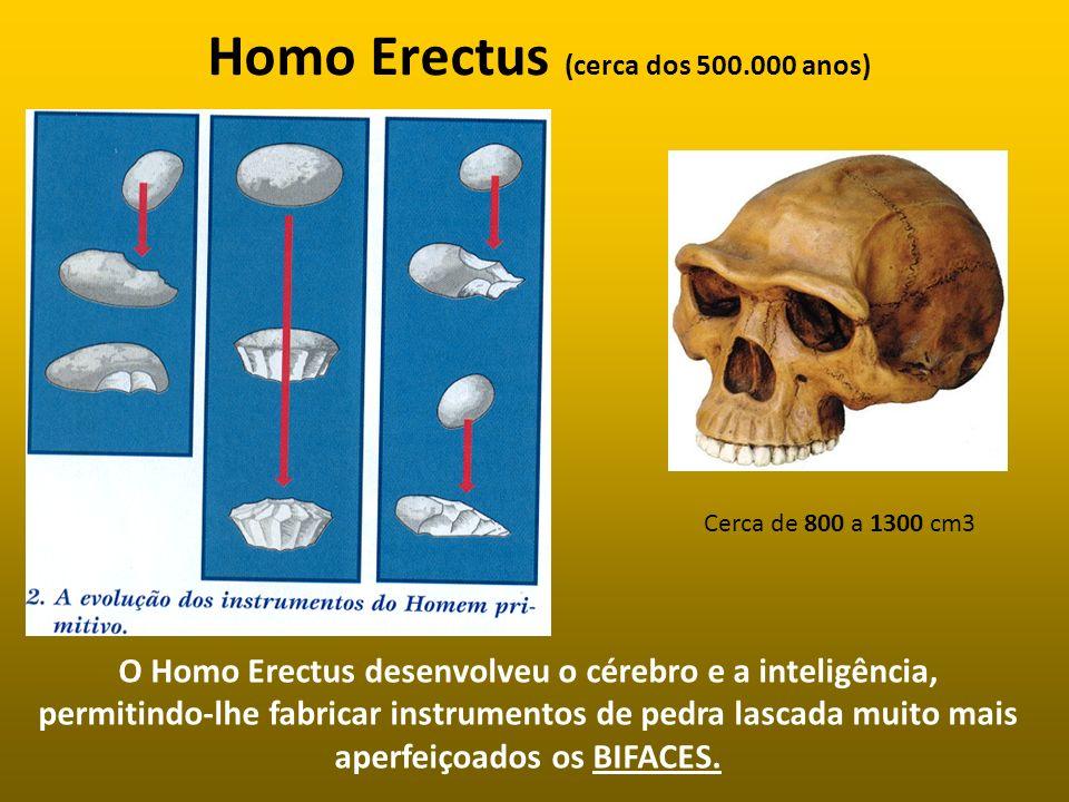 Homo Erectus (cerca dos 500.000 anos) O Homo Erectus desenvolveu o cérebro e a inteligência, permitindo-lhe fabricar instrumentos de pedra lascada mui