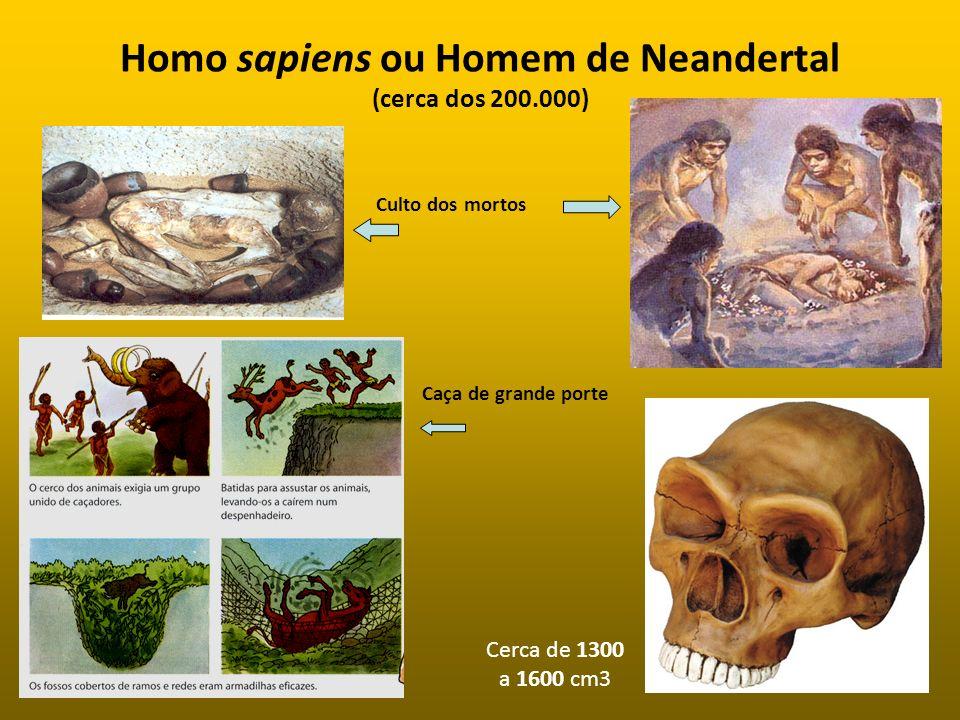 Homo sapiens ou Homem de Neandertal (cerca dos 200.000) Culto dos mortos Caça de grande porte Cerca de 1300 a 1600 cm3