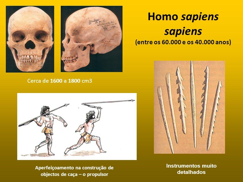 Homo sapiens sapiens (entre os 60.000 e os 40.000 anos) Instrumentos muito detalhados Cerca de 1600 a 1800 cm3 Aperfeiçoamento na construção de object