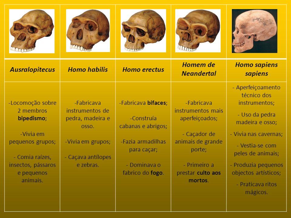 AusralopitecusHomo habilisHomo erectus Homem de Neandertal Homo sapiens sapiens -Locomoção sobre 2 membros bipedismo; -Vivia em pequenos grupos; - Com