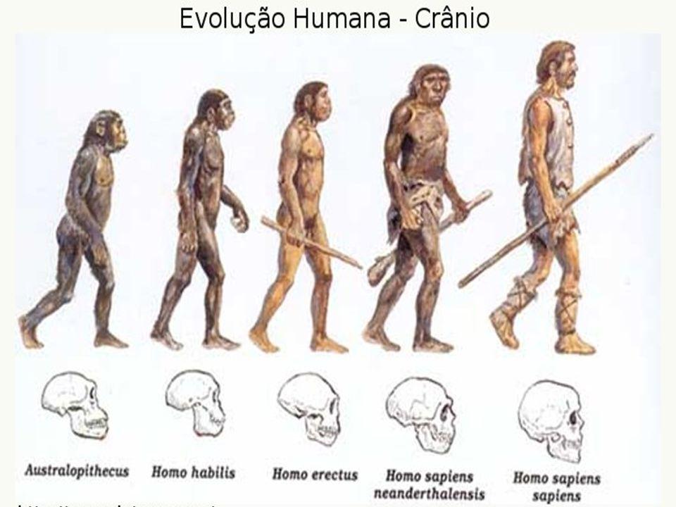 Homo sapiens sapiens (entre os 60.000 e os 40.000 anos) Instrumentos muito detalhados Cerca de 1600 a 1800 cm3 Aperfeiçoamento na construção de objectos de caça – o propulsor