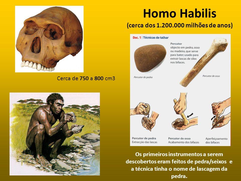 Homo Habilis (cerca dos 1.200.000 milhões de anos) Os primeiros instrumentos a serem descobertos eram feitos de pedra/seixos e a técnica tinha o nome