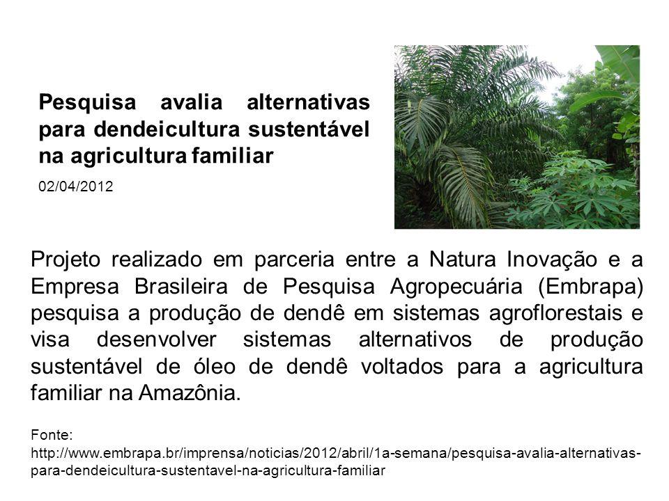 Projeto realizado em parceria entre a Natura Inovação e a Empresa Brasileira de Pesquisa Agropecuária (Embrapa) pesquisa a produção de dendê em sistem