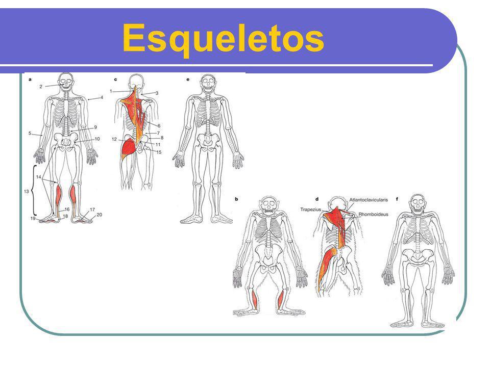 Esqueletos Homem