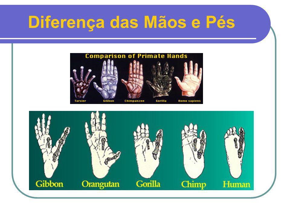 Diferença das Mãos e Pés