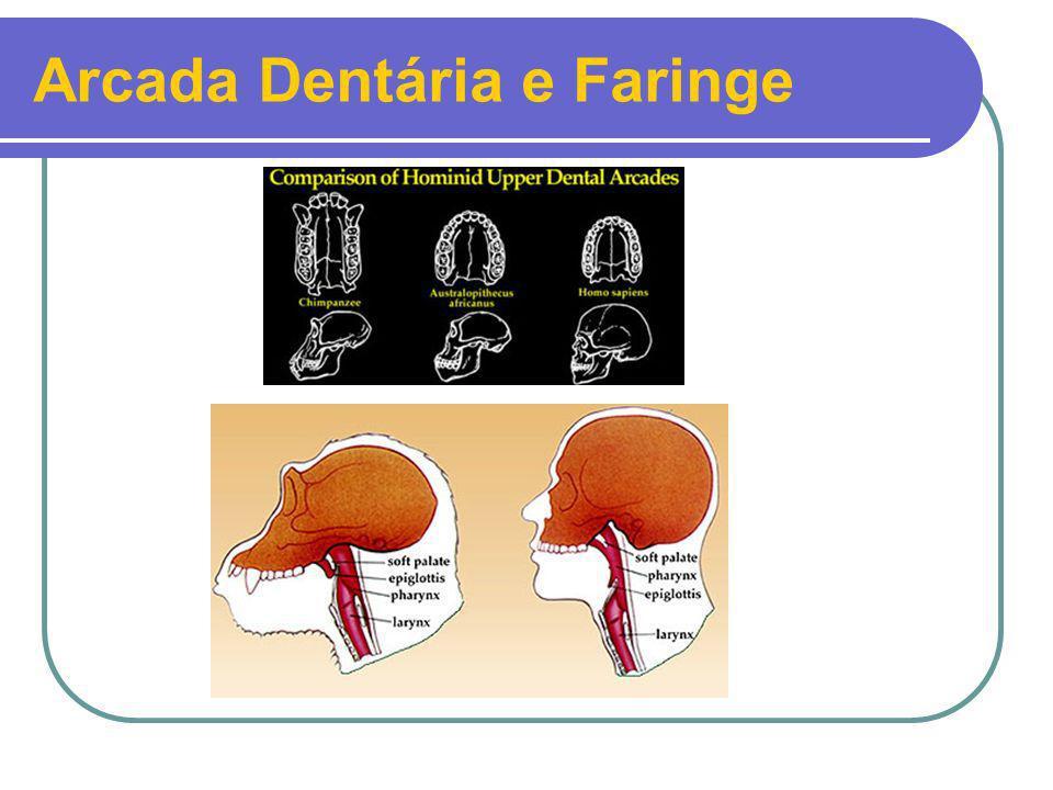 Arcada Dentária e Faringe