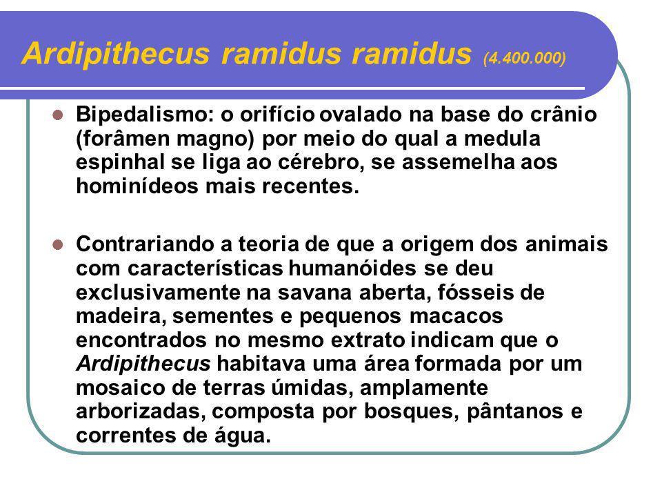 Bipedalismo: o orifício ovalado na base do crânio (forâmen magno) por meio do qual a medula espinhal se liga ao cérebro, se assemelha aos hominídeos m