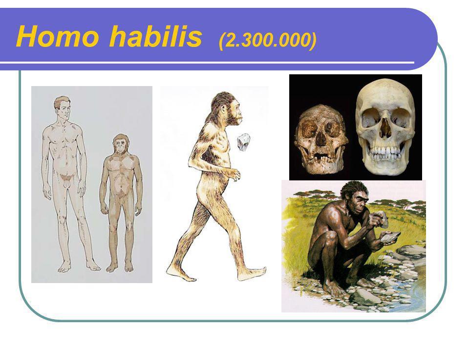 Homo habilis (2.300.000)