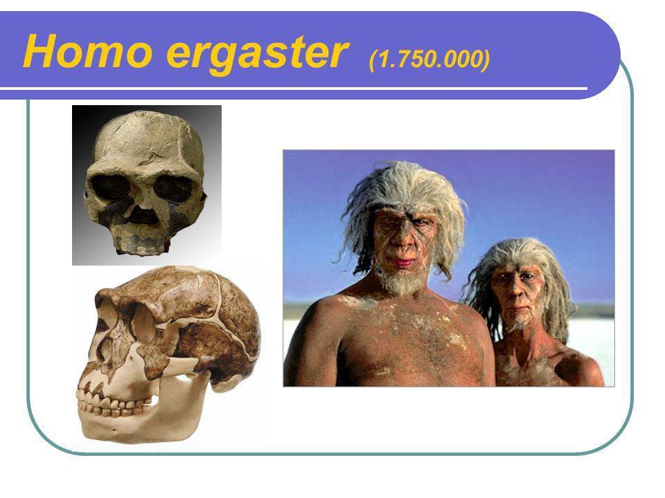 Homo ergaster (1.750.000)