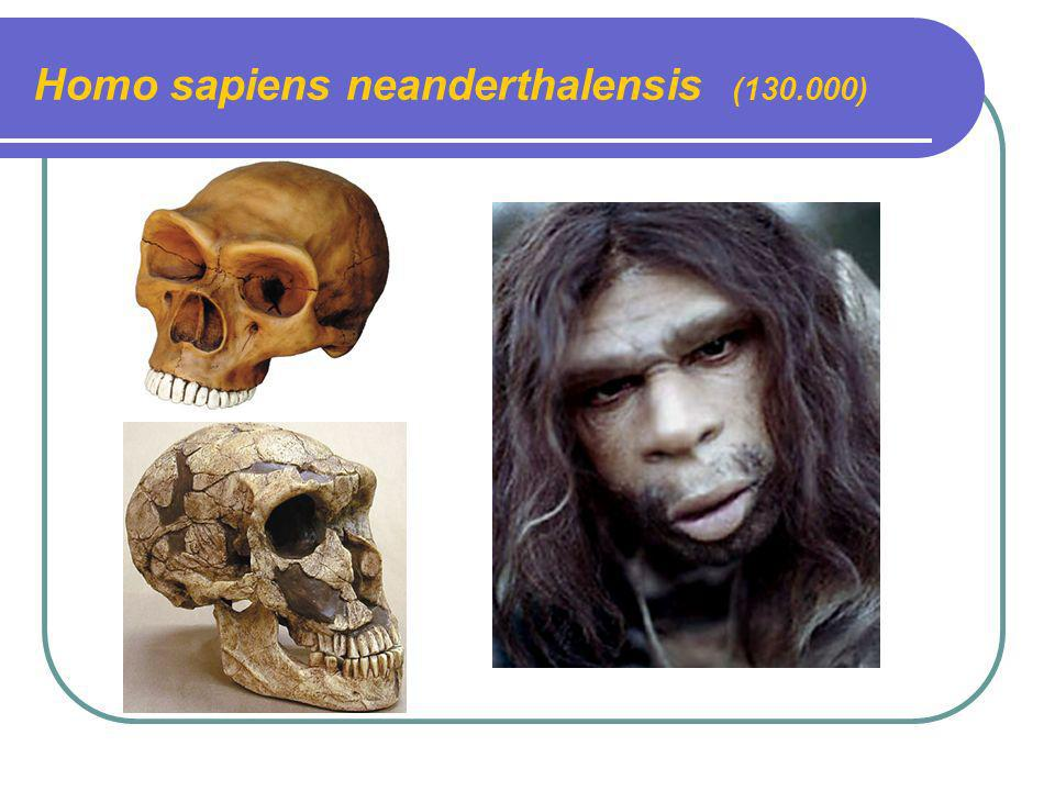 Homo sapiens neanderthalensis (130.000)