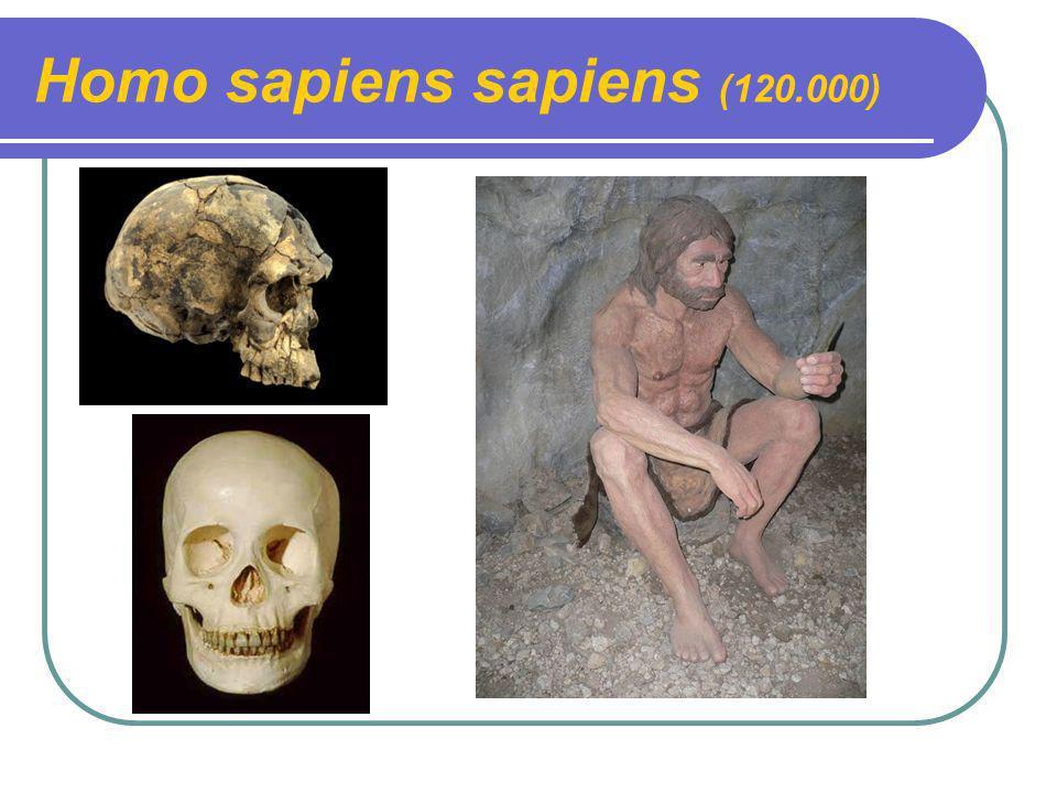 Homo sapiens sapiens (120.000)