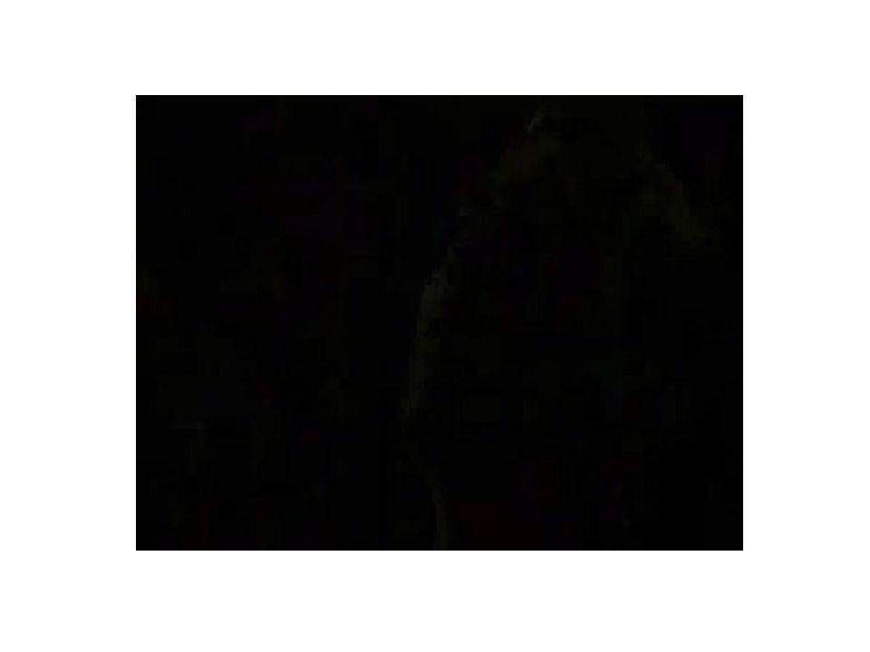 (...) Isto confirma a afirmativa que ousei fazer no início, de que o progresso dos romanos não se devia ao acaso e não era involuntário, como alguns entre os gregos preferem pensar, mas que, experimentando-se em tais vastas e perigosas empresas, era perfeitamente natural que eles não somente acumulassem a coragem para formular um objetivo de domínio universal, mas executassem seu propósito.