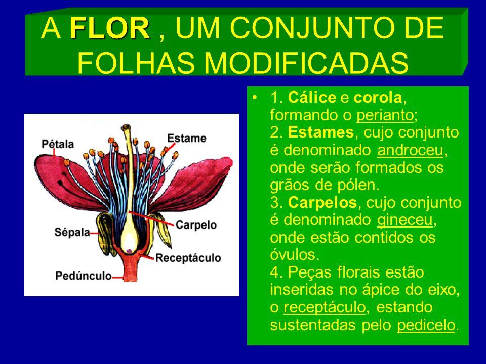 FLOR A FLOR, UM CONJUNTO DE FOLHAS MODIFICADAS 1.Cálice e corola, formando o perianto; 2.