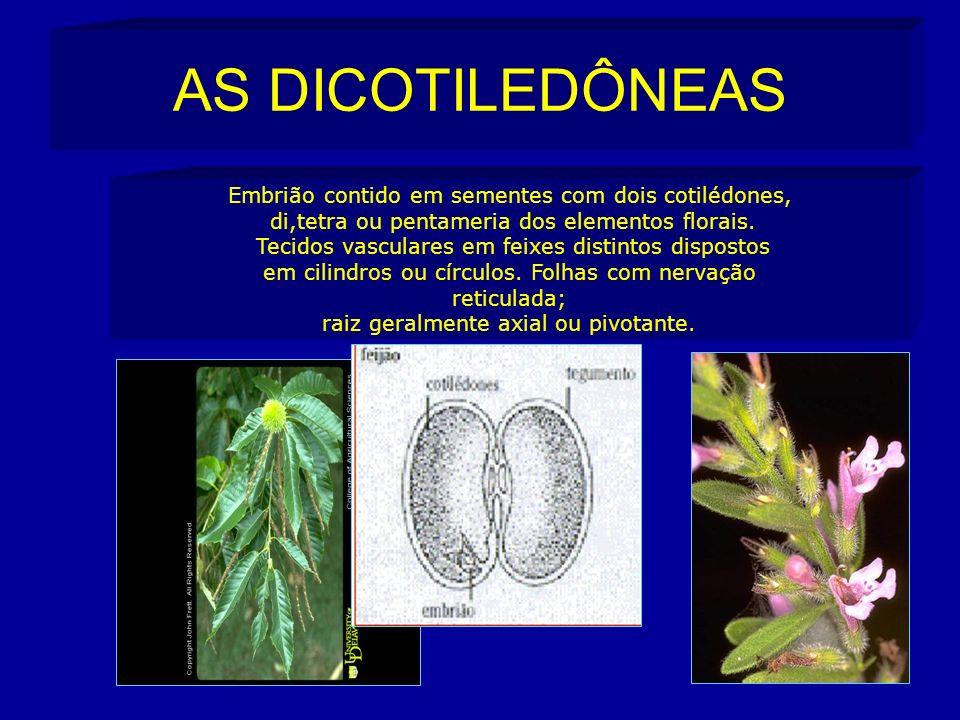 AS DICOTILEDÔNEAS Embrião contido em sementes com dois cotilédones, di,tetra ou pentameria dos elementos florais.