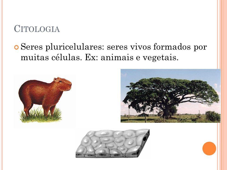 C ITOLOGIA Seres pluricelulares: seres vivos formados por muitas células. Ex: animais e vegetais.