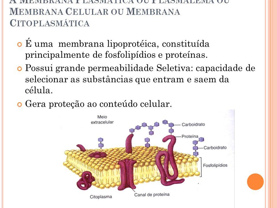 A M EMBRANA P LASMÁTICA OU P LASMALEMA OU M EMBRANA C ELULAR OU M EMBRANA C ITOPLASMÁTICA É uma membrana lipoprotéica, constituída principalmente de f