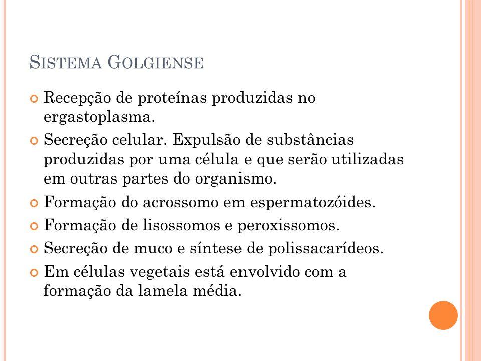 S ISTEMA G OLGIENSE Recepção de proteínas produzidas no ergastoplasma. Secreção celular. Expulsão de substâncias produzidas por uma célula e que serão