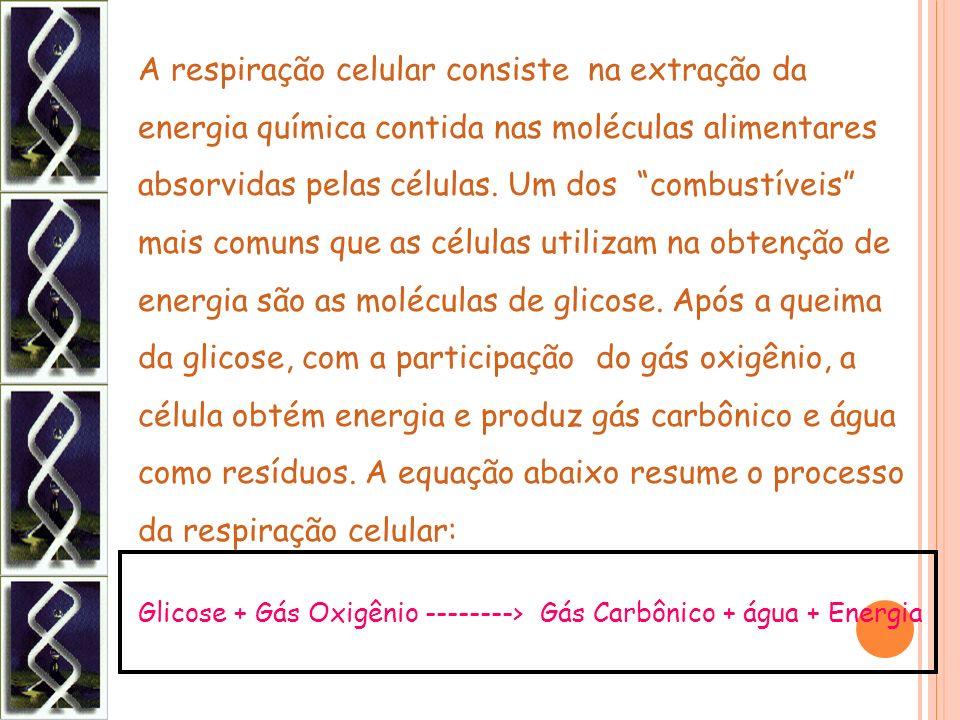 Glicose + Gás Oxigênio --------> Gás Carbônico + água + Energia A respiração celular consiste na extração da energia química contida nas moléculas ali
