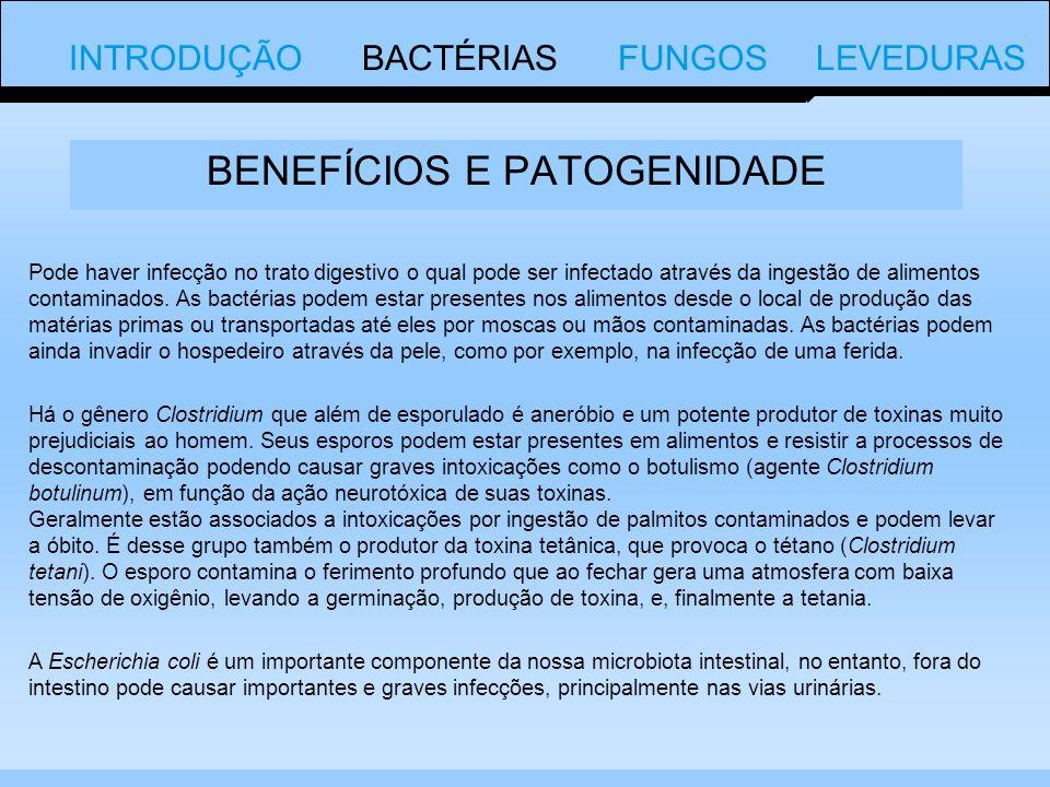 Pode haver infecção no trato digestivo o qual pode ser infectado através da ingestão de alimentos contaminados.