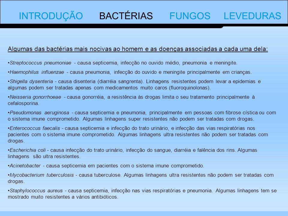 Algumas das bactérias mais nocivas ao homem e as doenças associadas a cada uma dela: Streptococcus pneumoniae - causa septicemia, infecção no ouvido médio, pneumonia e meningite.