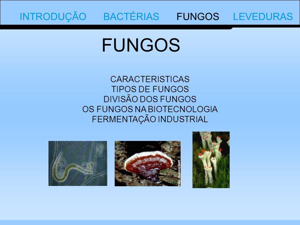 CARACTERISTICAS TIPOS DE FUNGOS DIVISÃO DOS FUNGOS OS FUNGOS NA BIOTECNOLOGIA FERMENTAÇÃO INDUSTRIAL FUNGOS