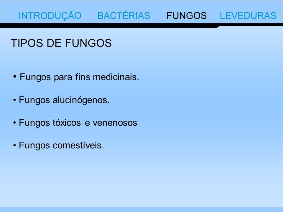INTRODUÇÃO BACTÉRIAS FUNGOS LEVEDURAS Fungos para fins medicinais.