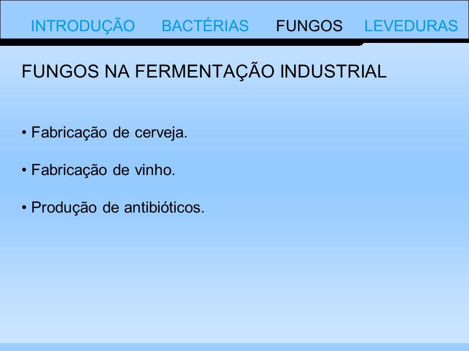 INTRODUÇÃO BACTÉRIAS FUNGOS LEVEDURAS Fabricação de cerveja.