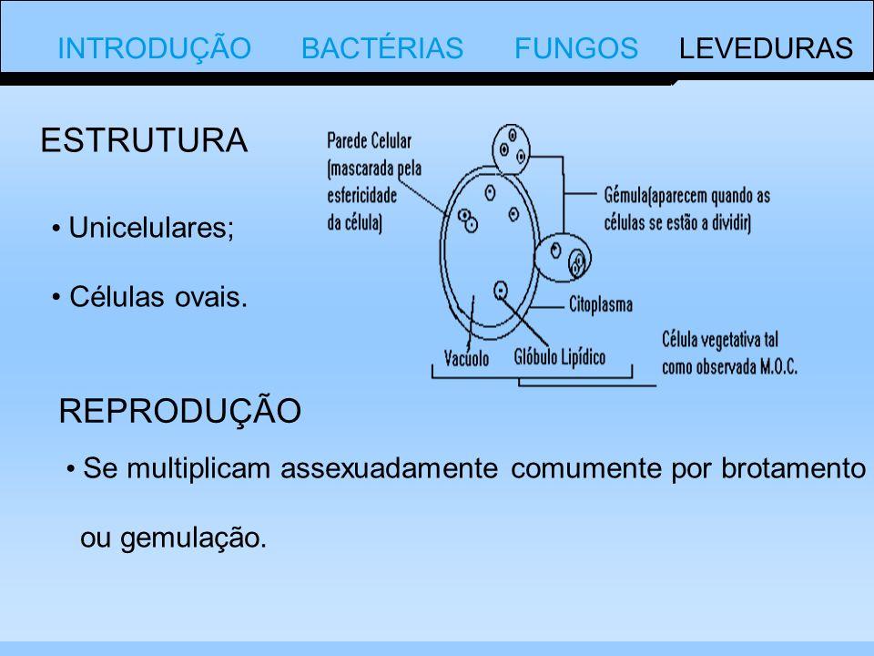 INTRODUÇÃO BACTÉRIAS FUNGOS LEVEDURAS Unicelulares; Células ovais.