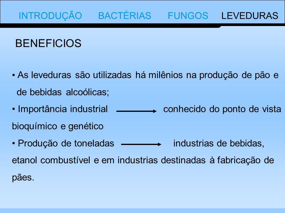INTRODUÇÃO BACTÉRIAS FUNGOS LEVEDURAS As leveduras são utilizadas há milênios na produção de pão e de bebidas alcoólicas; Importância industrial conhecido do ponto de vista bioquímico e genético Produção de toneladas industrias de bebidas, etanol combustível e em industrias destinadas à fabricação de pães.