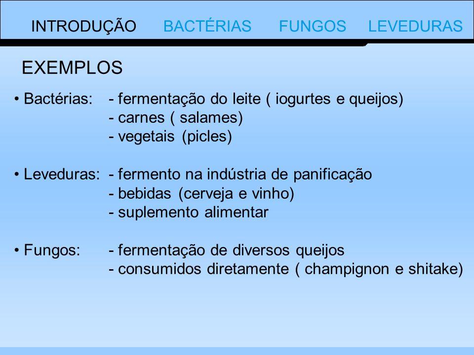 INTRODUÇÃO BACTÉRIAS FUNGOS LEVEDURAS Bactérias:- fermentação do leite ( iogurtes e queijos) - carnes ( salames) - vegetais (picles) Leveduras:- fermento na indústria de panificação - bebidas (cerveja e vinho) - suplemento alimentar Fungos:- fermentação de diversos queijos - consumidos diretamente ( champignon e shitake) EXEMPLOS