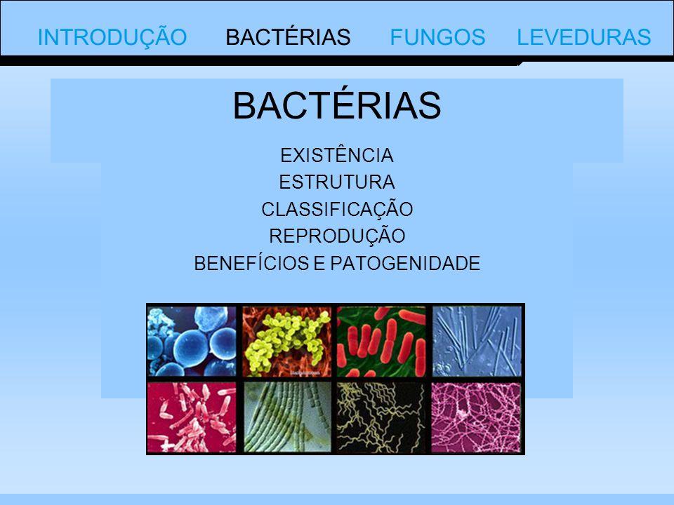 Bactérias são procariontes Procariontes: organismos unicelulares e microscópicos que não possuem núcleo organizado O tamanho das bactérias geralmente varia de 0,5 a 5 μm Só podem ser vistas com microscópio Sem microscópio é possível ver as colônias INTRODUÇÃO BACTÉRIAS FUNGOS LEVEDURAS CARACTERISTICAS A maior bactéria conhecida foi descoberto em 1999 e se chama Pérola de Enxofre de Namibia (Thiomargarita Namibiensis).