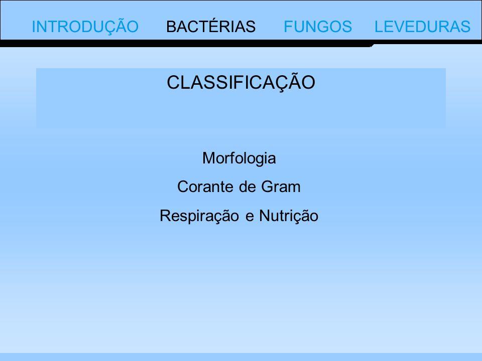 CLASSIFICAÇÃO Morfologia Corante de Gram Respiração e Nutrição INTRODUÇÃO BACTÉRIAS FUNGOS LEVEDURAS