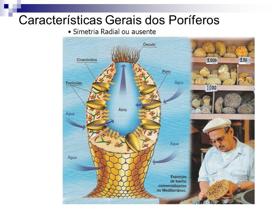 Características Gerais dos Poríferos Simetria Radial ou ausente