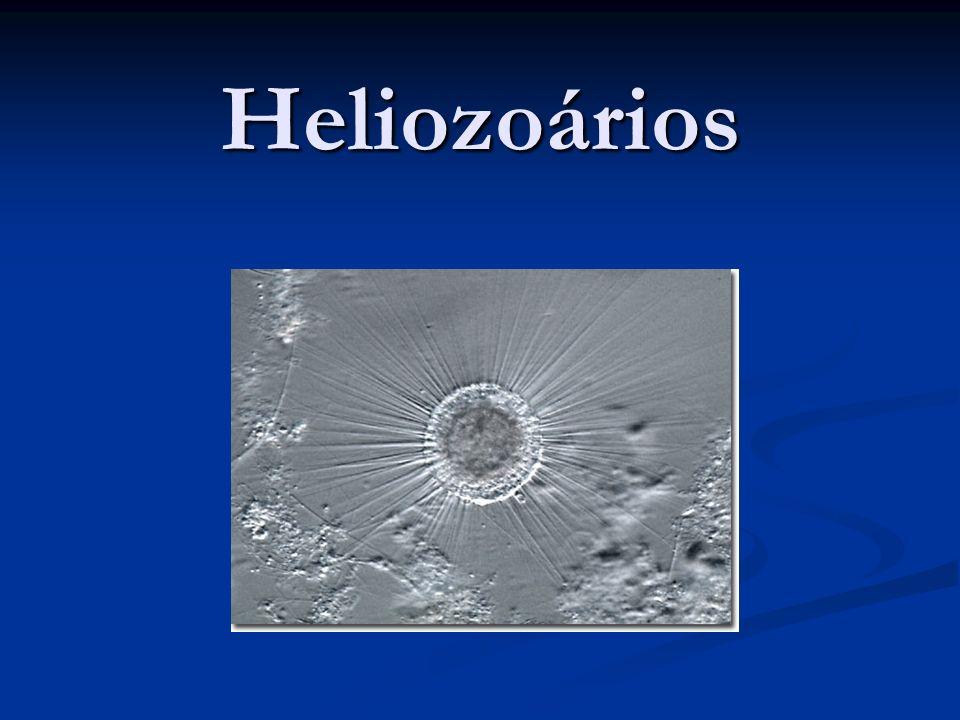 Heliozoários