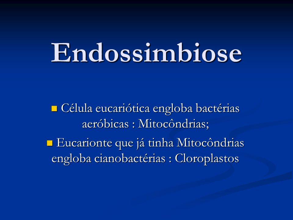 Endossimbiose Célula eucariótica engloba bactérias aeróbicas : Mitocôndrias; Célula eucariótica engloba bactérias aeróbicas : Mitocôndrias; Eucarionte que já tinha Mitocôndrias engloba cianobactérias : Cloroplastos Eucarionte que já tinha Mitocôndrias engloba cianobactérias : Cloroplastos