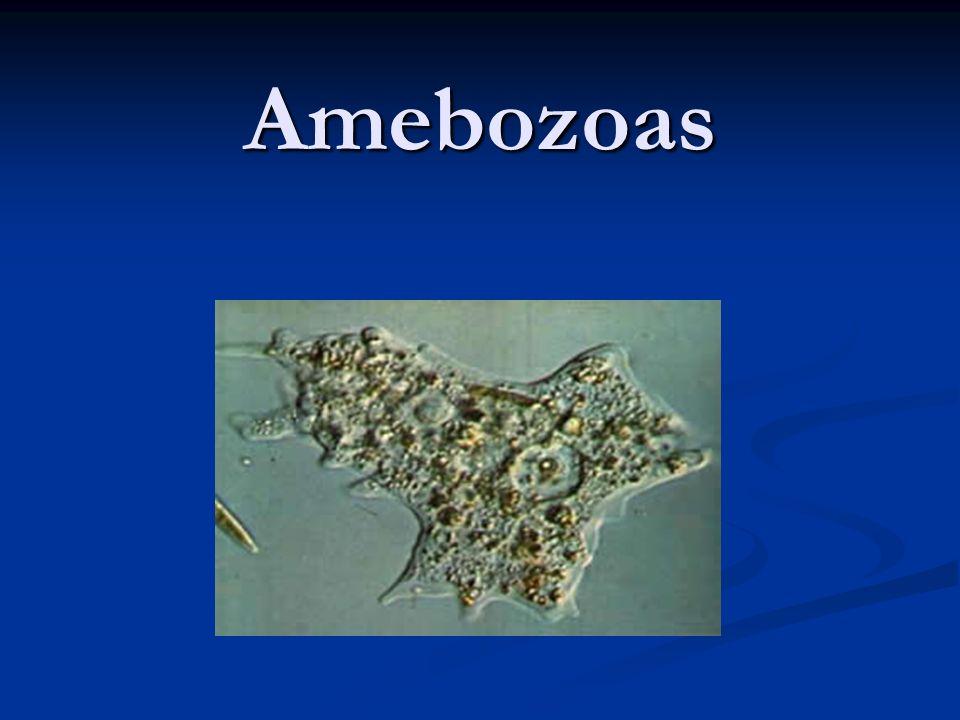 Amebozoas