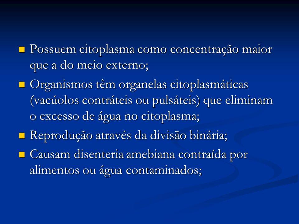 Possuem citoplasma como concentração maior que a do meio externo; Possuem citoplasma como concentração maior que a do meio externo; Organismos têm organelas citoplasmáticas (vacúolos contráteis ou pulsáteis) que eliminam o excesso de água no citoplasma; Organismos têm organelas citoplasmáticas (vacúolos contráteis ou pulsáteis) que eliminam o excesso de água no citoplasma; Reprodução através da divisão binária; Reprodução através da divisão binária; Causam disenteria amebiana contraída por alimentos ou água contaminados; Causam disenteria amebiana contraída por alimentos ou água contaminados;