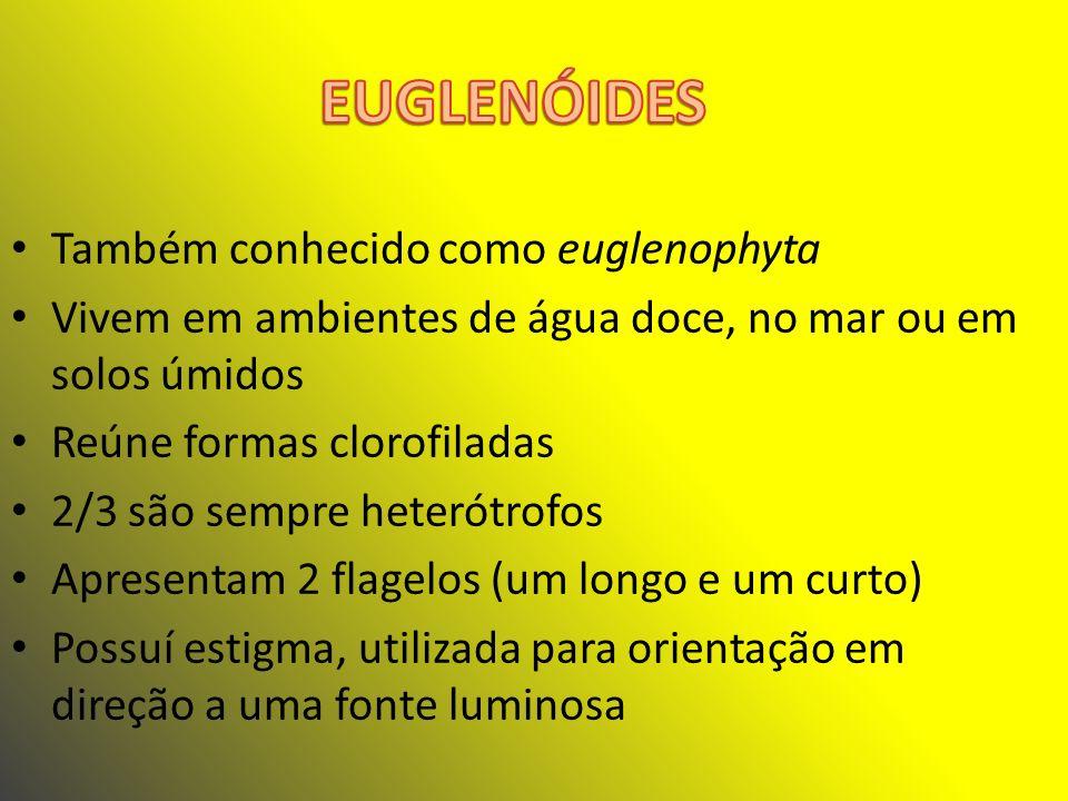 Representação de uma euglenóide